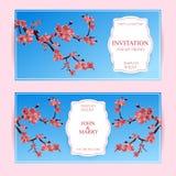Sakura, illustrazione di Cherry Blossoming Tree Vector Card Insieme di belle insegne floreali, cartoline d'auguri, inviti di nozz Fotografia Stock
