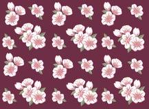 Sakura inconsútil Imágenes de archivo libres de regalías