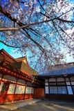 Sakura in japan Stock Photos