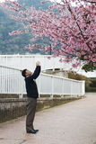 Sakura japan Obrazy Royalty Free
