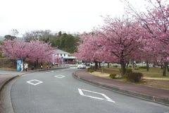 Sakura japan Obraz Royalty Free