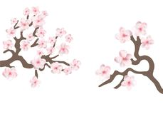 Sakura japan cherry branch with blooming flowers vector illustration. Branches with pink cherry flowers royalty free illustration