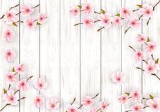 Sakura japan cherry branch with a pink flowers stock photo