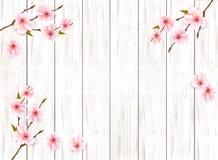 Sakura japan cherry branch on wooden background. royalty free stock photos