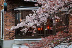 Sakura with Japanese building background. Close up of a cherry blossom tree with Japanese style building blackground Stock Photo