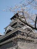Sakura and Japanese castle Royalty Free Stock Image