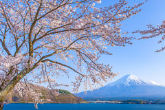 Sakura körsbärsröd blomning och Mt fuji Fotografering för Bildbyråer