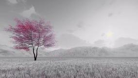 Sakura körsbärsrött träd i blomultrarapid 4K stock illustrationer