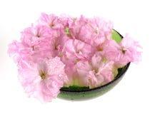 Sakura in kom - kuuroorddecoratie royalty-vrije stock afbeeldingen