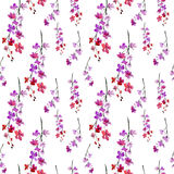 Sakura kwiaty. wzór Zdjęcia Royalty Free
