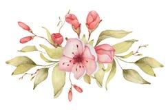 Sakura kwitnie akwareli ilustrację Okwitnięcie płatka bukiet royalty ilustracja