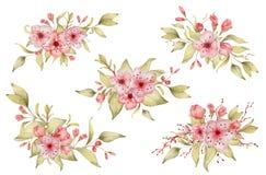 Sakura kwitnie akwareli ilustracj? Okwitni?cie p?atka bukiet ilustracja wektor