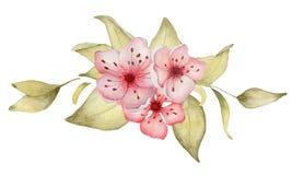 Sakura kwitnie akwareli ilustracj? Okwitni?cie p?atka bukiet royalty ilustracja