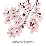 Sakura kwitnie wektorową ilustrację n Zdjęcia Stock