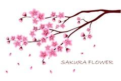 Sakura kwitnie wektorową ilustrację n Zdjęcie Stock