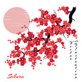 Sakura kwitnie wektorowego tło Obraz Royalty Free