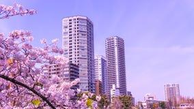 Sakura kwitnienie w wiośnie przy Tokio Ueno parkiem Zdjęcia Stock
