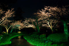 Sakura la cerise japonaise la nuit Photo stock