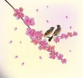 Sakura La sera nella ciliegia di fioritura del giardino e gli uccelli cantano Fotografia Stock Libera da Diritti