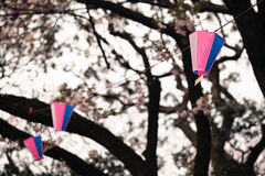Sakura Lampion Stock Images