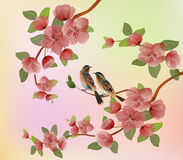 Sakura , landscape Royalty Free Stock Image
