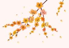 Sakura , landscape Stock Images