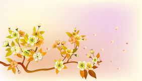 Sakura , landscape Stock Photography