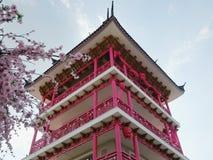 Sakura lato Zdjęcia Royalty Free