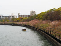 Sakura le long de la rivière Osaka Photo libre de droits