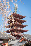 Sakura lub czereśniowy okwitnięcie na Japan Zdjęcie Stock