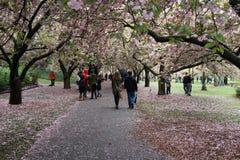 Sakura Matsuri 2016 del 4 10 Royaltyfri Foto