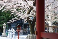 Sakura MeguroFudo Lizenzfreies Stockfoto