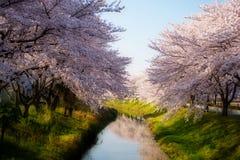 Sakura met dromerig effect #2 Stock Foto's