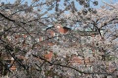Sakura met Fukaya-Post Royalty-vrije Stock Afbeeldingen