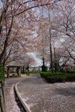 Sakura met Fukaya Station#2 Stock Afbeelding