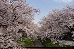 Sakura met Fukaya Station#4 Royalty-vrije Stock Foto