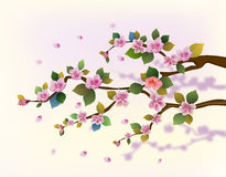 sakura, molla, cartolina. Immagini Stock Libere da Diritti