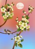 Sakura, molla, cartolina Fotografia Stock
