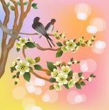 Sakura, molla, cartolina Fotografie Stock