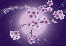 Sakura and moon, spring card. Stock Images