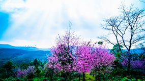 Sakura Mountain landscape Stock Photos