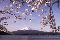 Sakura & Mt Fuji royalty free stock image