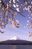 Sakura & Mt Fuji Stock Image