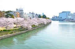 Sakura nära floden arkivfoto