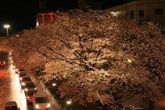Sakura na cidade na noite Imagem de Stock