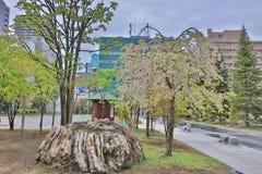 Sakura  the Nakajima Park at  Sapporo Royalty Free Stock Image