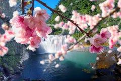 Sakura with nice background Royalty Free Stock Photos