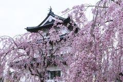 Sakura och hirosakislott Arkivfoto
