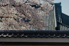 Sakura och tak Fotografering för Bildbyråer