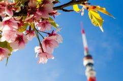 SAKURA OCH TOKYO TORN Royaltyfria Bilder